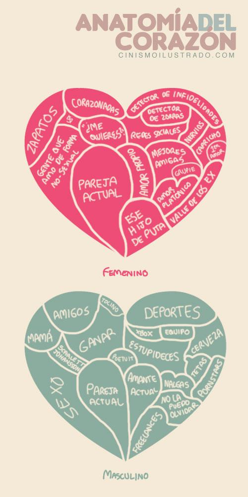 Anatomía del corazón de la mujer y del hombre. | Da H3inZon3